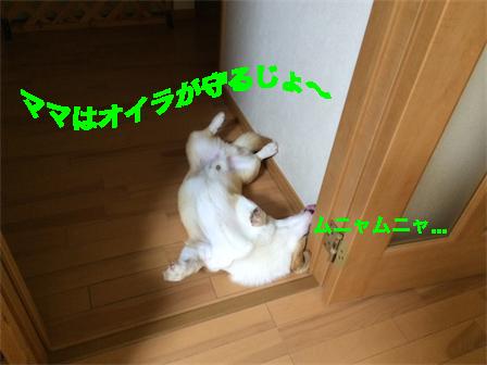 6_20140808094705b9c.jpg