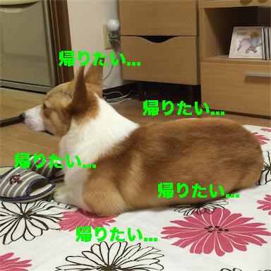 6_201408101322439d5.jpg