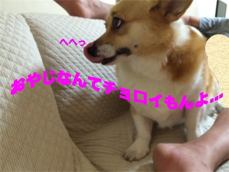 6_20140816102008585.jpg