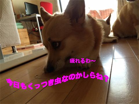 7_2014071109503563e.jpg