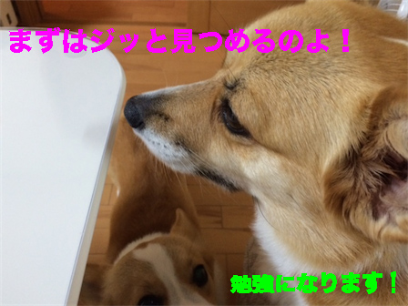7_201408161024340e7.jpg
