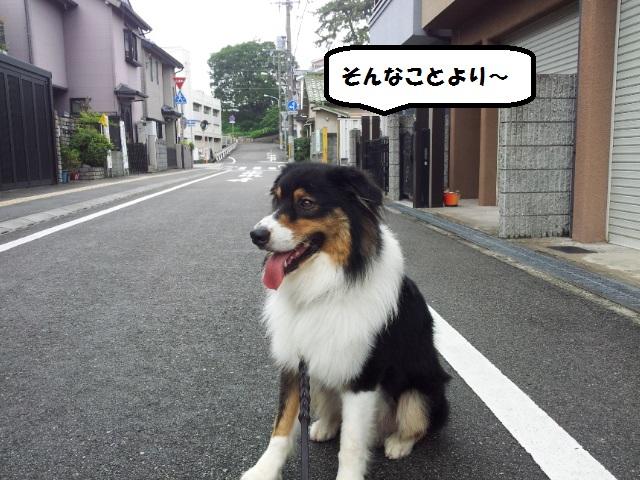20140713_154440.jpg