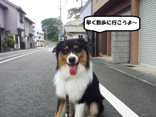 20140713_154446.jpg