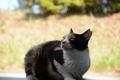 アニマルフレンドさんのブログへ(地域猫のしるし_耳先Vカットオス右耳、メス左耳)