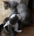 かわいい猫動画NHK投稿20140726_cats