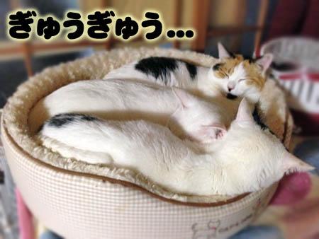 猫ぎゅうぎゅう2014.3.1