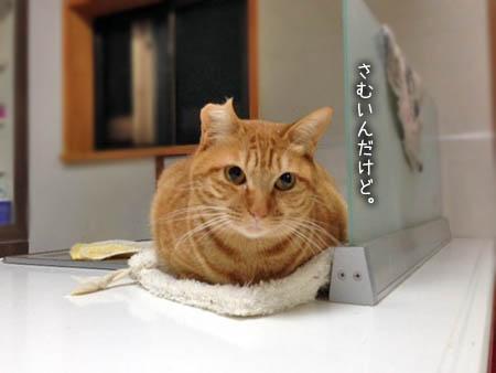 ちゃーこ2014.4.4