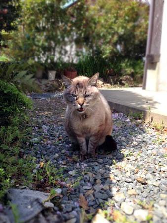 隣の猫2014.4.19