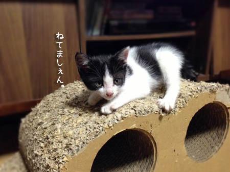 ぎゅーたん2014.6.5②