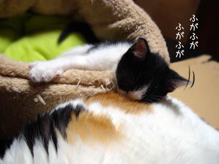 ぎゅーたん2014.7.1②