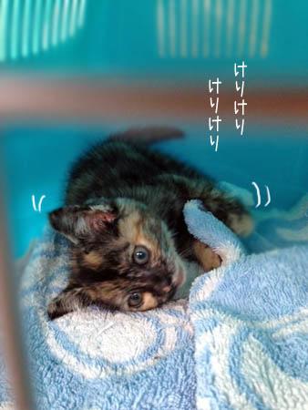 ぐーちゃん2014.7.22②