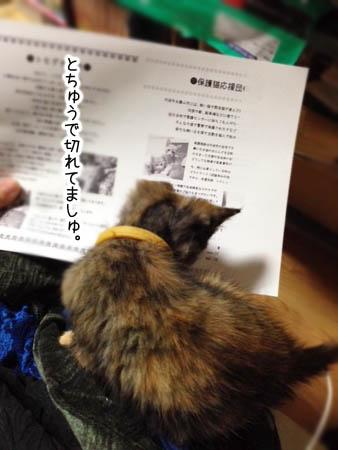 ぐーちゃん2014.8.10