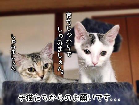 子猫2014.8.20