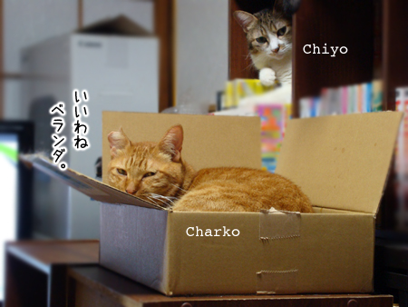 ちゃーこ&ちよ2014.9.3