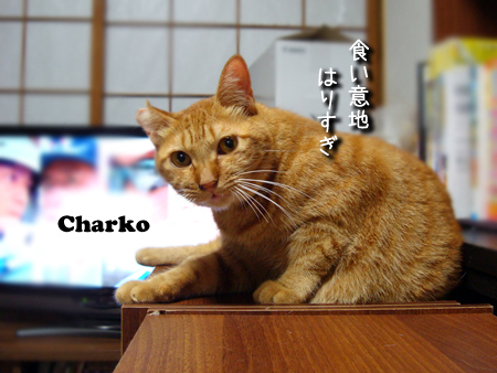 ちゃーこ2014.9.8