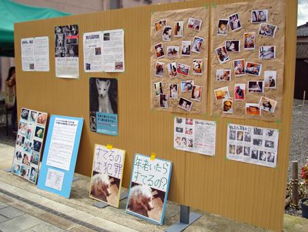 譲渡会2014.9.13②