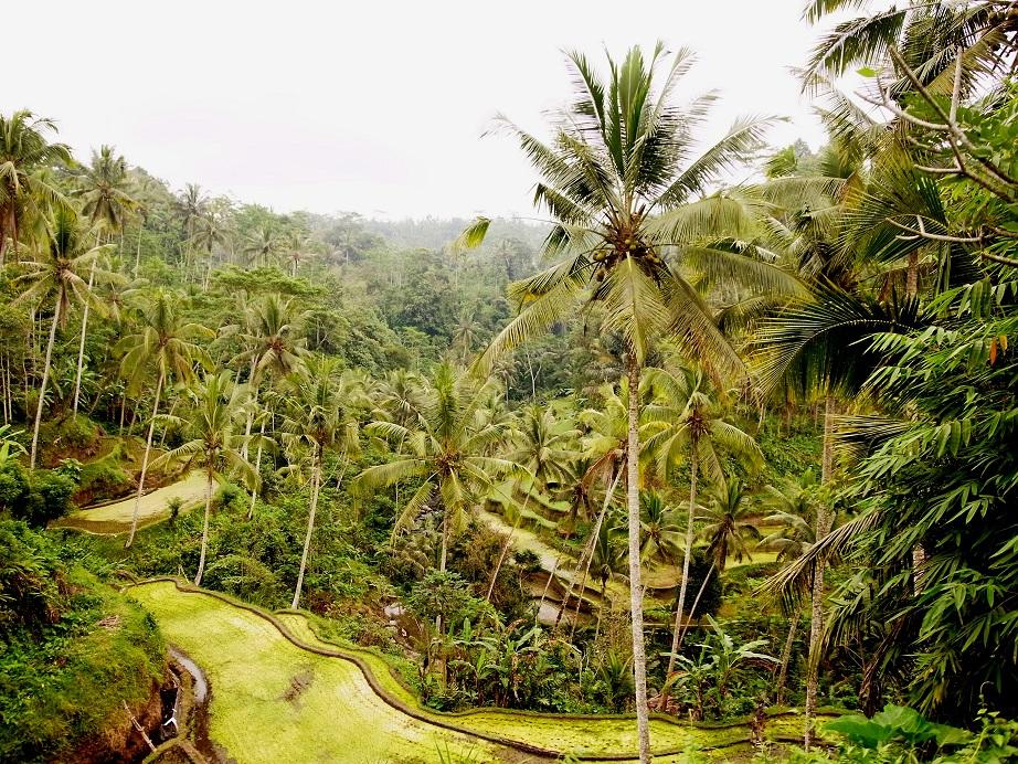 バリ島2014#4