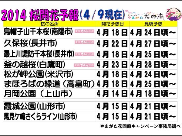 山形桜開花予想2014
