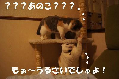 2014051710.jpg