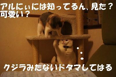 2014051712.jpg
