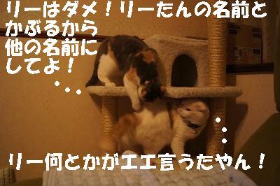 201405176.jpg