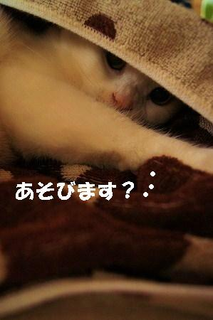 s-201403285.jpg