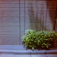 fujipetEE5_2014061220165987b.jpg