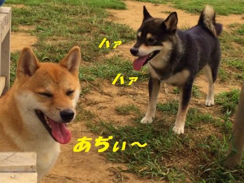 Blog写真 5