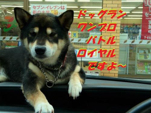 BlogP1550995.jpg