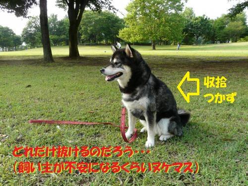 P1530957_convert_20140722132603325.jpg