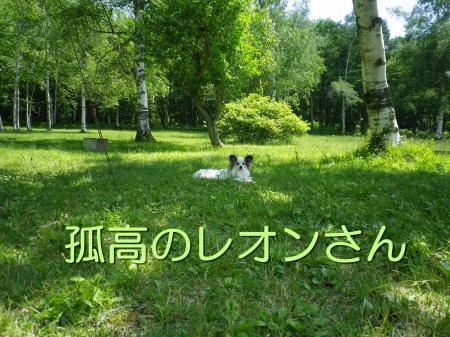 2014-06-27-1+023_convert_20140628093058.jpg