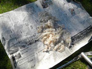 2697羊の毛