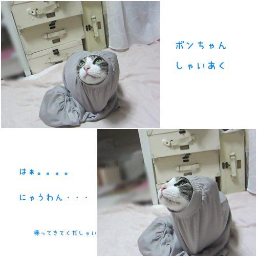 catsにゃ
