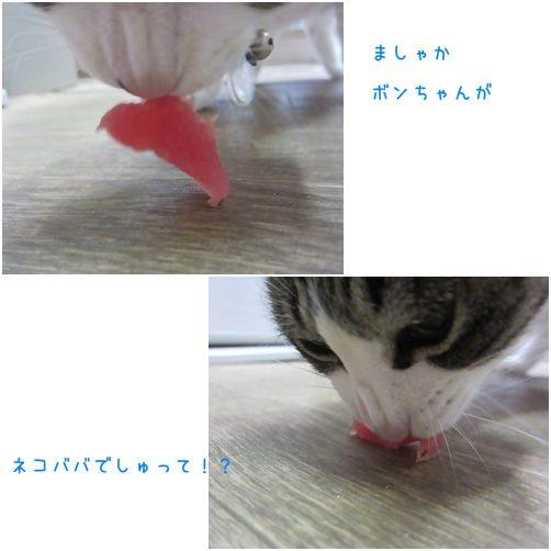catsねこばば