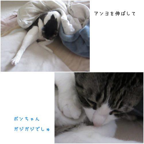 catsがじ