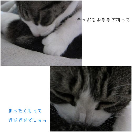 catsがじ3