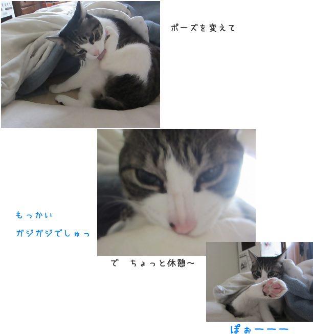 catsがじ222