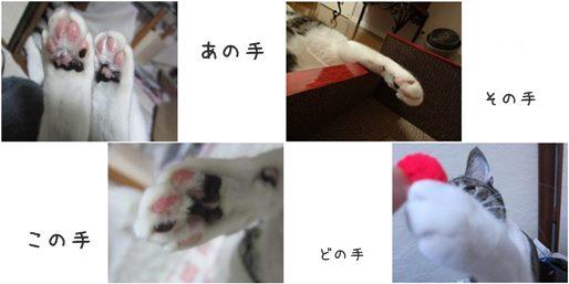catsてて