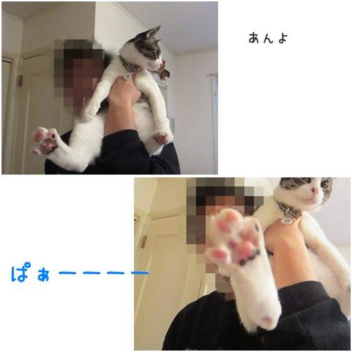 catsあんよ