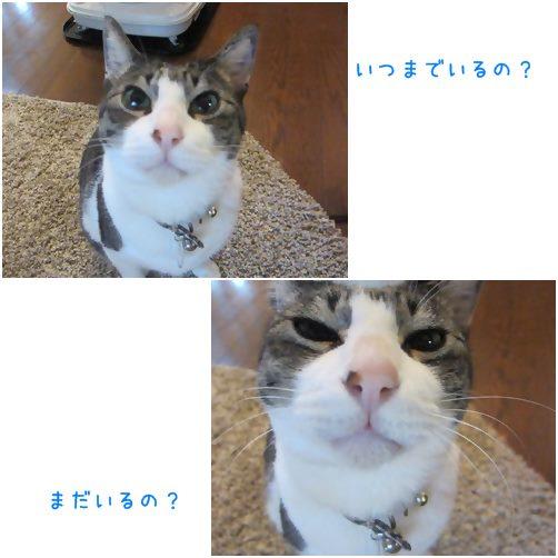 catsいる
