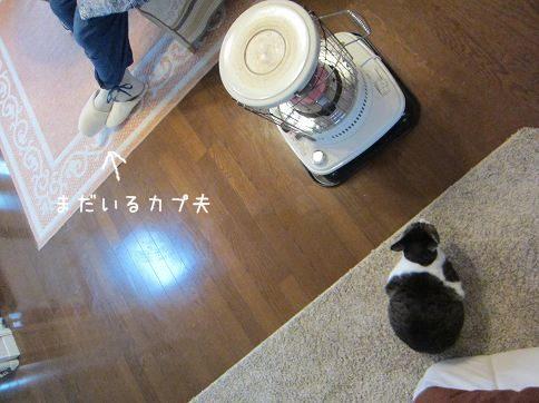 IMG_5577 2014 3 (445