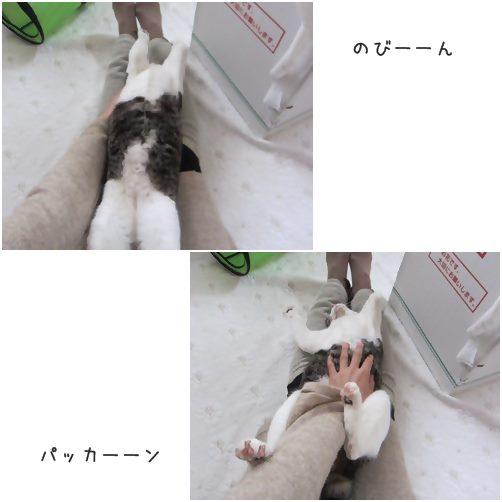catsのび