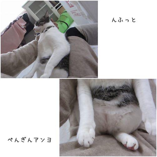 catsぺんぎん
