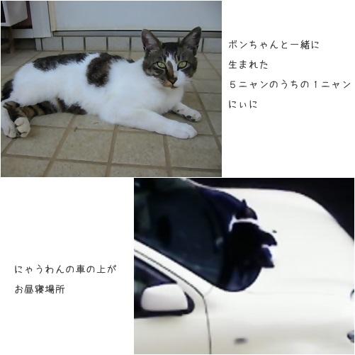 catsにいに