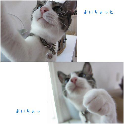 catsよいちょ