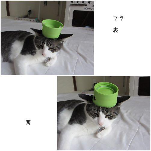 catsふた