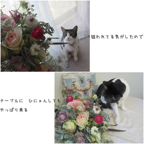catsひにゃん