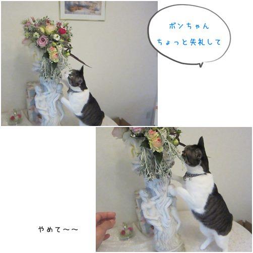 catsやめて