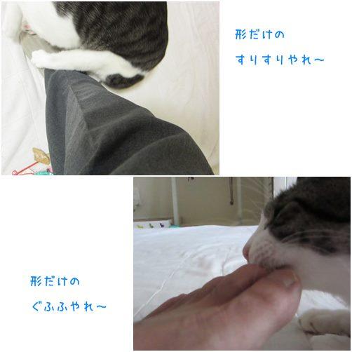 catsかたちだけ