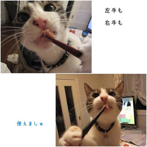 catsおはし